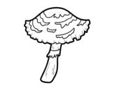 Dibuix de Bolet lepiota cristata per pintar