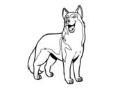 Dibuix de Gos llop per pintar