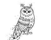 Dibuix de Òliba d'hivern per pintar